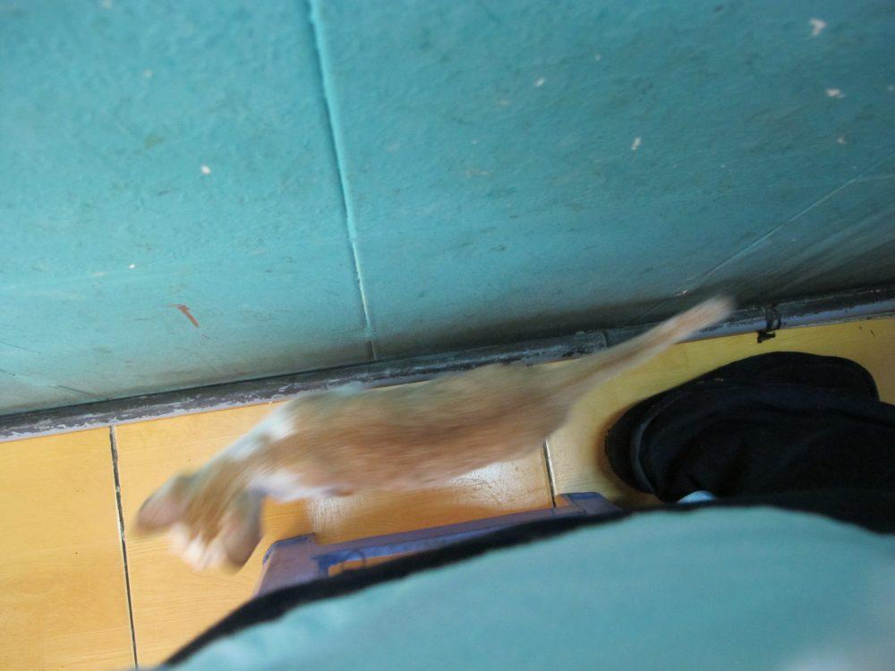 お店の中を走り回る猫2